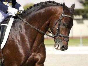 Horse-Equipment-