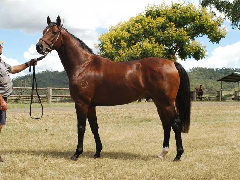 Horse-breed