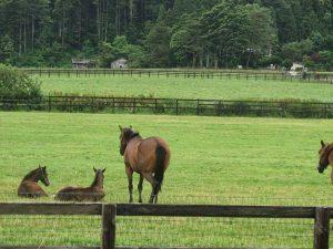 Horse-farming