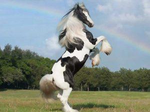 Horsebreed