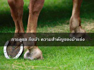 Horse-hoof-care